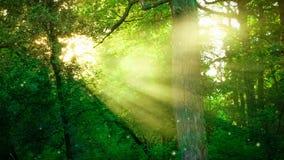 通过树分支晒黑发光在森林里 影视素材