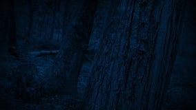 通过树干在森林在晚上 股票视频