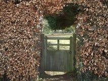 通过树篱 免版税图库摄影