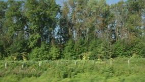 通过树行的高速列车移动  股票录像