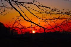 通过树被观察的日落 免版税图库摄影