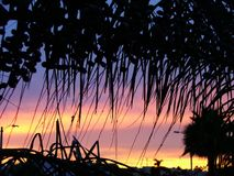 通过棕榈树 库存图片