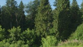 通过森林的高速列车移动 影视素材