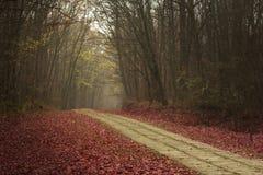通过森林被铺的道路在autmn期间 库存照片