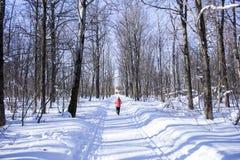 通过森林跑的冬天 免版税库存照片