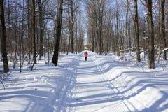 通过森林跑的冬天 免版税库存图片