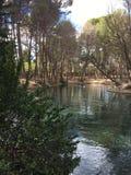 通过森林,向河2 免版税库存照片
