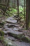 通过森林 免版税库存图片