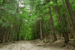 通过森林 库存照片