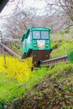 通过樱花隧道的倾斜汽车在Funaoka城堡废墟公园,柴田,宫城, Tohoku,日本 库存照片