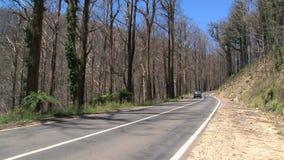 通过汽车烧了树, Dandenong范围,澳大利亚 影视素材