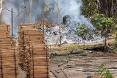 通过烧密林用木材建造贸易在巴西 免版税库存图片