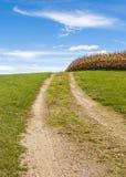 通过玉米田的土路 免版税库存照片