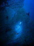 通过珊瑚 免版税库存图片