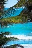 通过看对棕榈叶向加勒比蓝色海 免版税库存照片