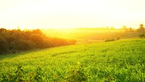 通过破晓在绿色领域,夏天太阳断裂的光芒从天际,在日落的多小山干草原 股票视频
