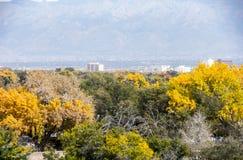 通过秋天叶子看的亚伯科基地平线  库存照片