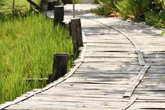 通过竹曲线走道在米领域,绿色领域在agrotourism地方 免版税库存图片