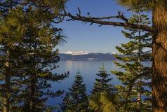 通过结构树的被查看的蓝色湖 库存照片