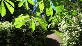 通过绿色树的步行在行动 照相机移动通过绿叶 4K 股票录像