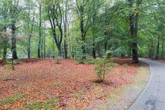 通过荷兰国家公园骑自行车道路Veluwe秋天森林  库存图片