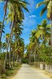 通过道路带领的可可椰子靠岸 海岛弗洛勒斯 印度尼西亚 免版税库存图片
