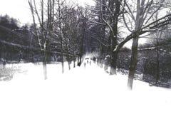 通过雪 库存照片