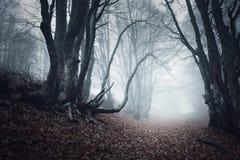 通过雾的一个神奇黑暗的老森林落后 秋天 库存图片