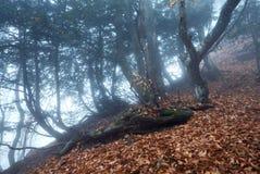通过雾的一个神奇黑暗的老森林落后 秋天 免版税图库摄影