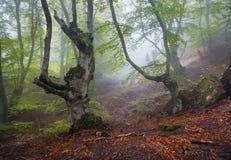 通过雾的一个神奇黑暗的老森林落后 秋天 免版税库存照片