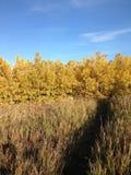 通过高草和森林落后在秋天 免版税库存照片