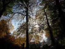 通过结构树 图库摄影