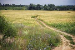 通过黑麦的黄色领域被铺的路轨道导致森林 免版税库存图片