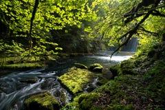 通过Franche Comté regionin的法国的小河一个森林 库存图片