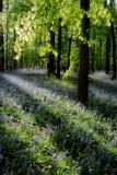 通配会开蓝色钟形花的草的森林 图库摄影