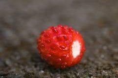 通配唯一的草莓 免版税库存图片