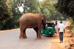 通配攻击的大象s 库存图片