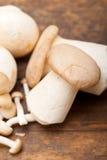 通配新鲜的蘑菇 免版税库存照片