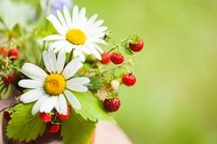 通配春黄菊的草莓 免版税库存照片