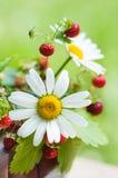 通配春黄菊的草莓 免版税库存图片