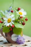 通配春黄菊的草莓 库存图片