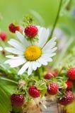 通配春黄菊的草莓 图库摄影