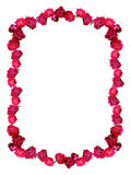 通配框架的玫瑰 库存图片
