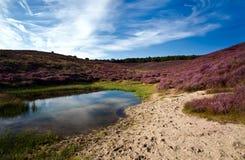 通配池塘和与石南花的含沙沙丘 免版税库存照片
