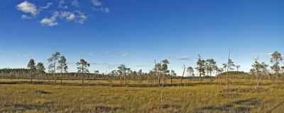 通配沼泽棕色草绿色的草甸 免版税库存照片