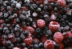 通配浆果的森林 免版税库存照片