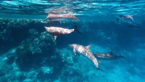 通配海豚的锭床工人 免版税图库摄影