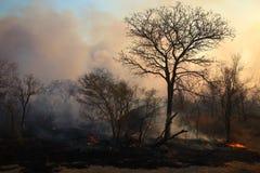 通配火的森林 免版税库存照片