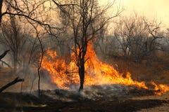 通配火的森林 库存照片