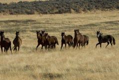 通配牧群的马 免版税库存照片